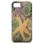 Anémonas verdes gigantes y estrellas de mar ocres iPhone 5 carcasa