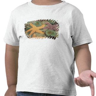Anémonas verdes gigantes y estrellas de mar ocres camisetas