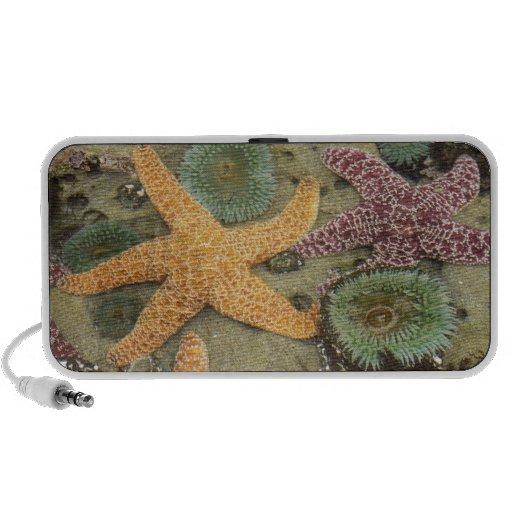 Anémonas verdes gigantes y estrellas de mar ocres portátil altavoz