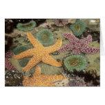 Anémonas verdes gigantes y estrellas de mar ocres tarjeta de felicitación