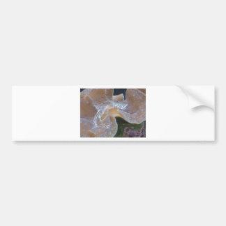 anemone 2 car bumper sticker