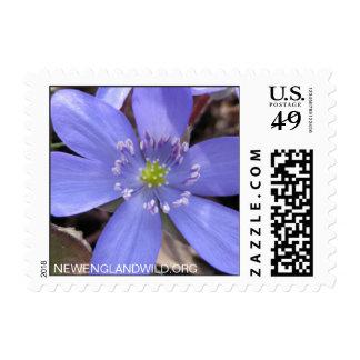 Anemone acutiloba, sharp-lobed hepatica postage