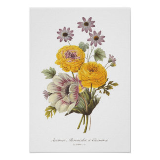 Anemone and Ranunculus Poster