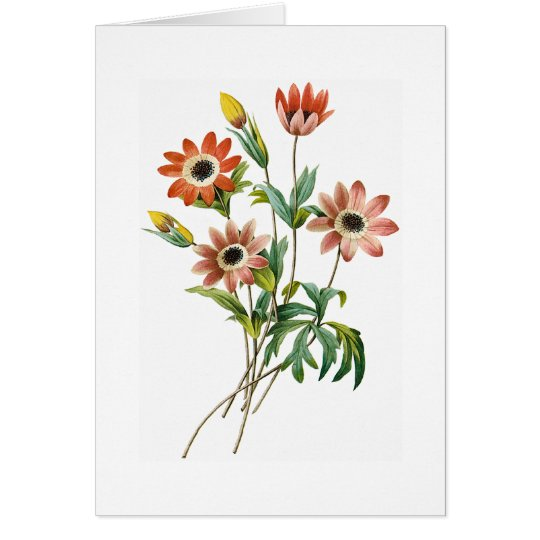 Anemone Birthday Greeting Card