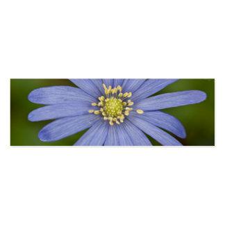 Anemone Blanda Business Card Template