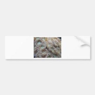 anemone car bumper sticker