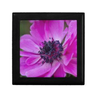 anemone coronaria in the garden gift box