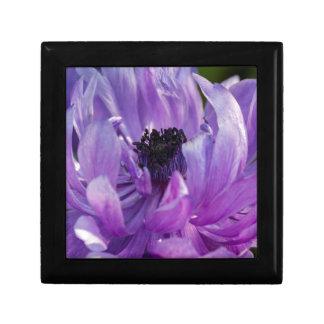 anemone coronaria in the garden keepsake box