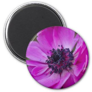 anemone coronaria in the garden magnet