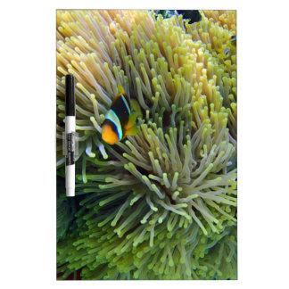 anemone fish Dry-Erase boards