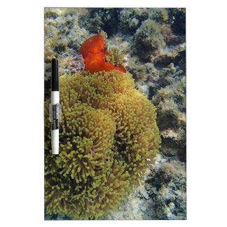 anemone fish Dry-Erase whiteboard