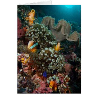 Anemone Fish Garden Card
