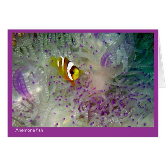 Anemone fish gift card - 01 - pink