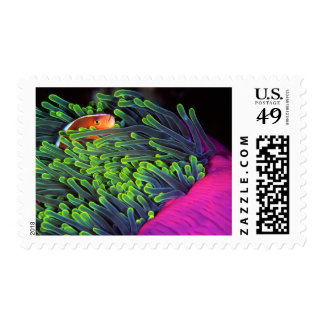 Anemone Fish Hiding In Anemone, Mozambique 2 Postage Stamps