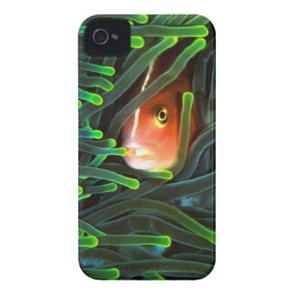 Anemone Fish Hiding In Anemone, Mozambique iPhone 4 Case
