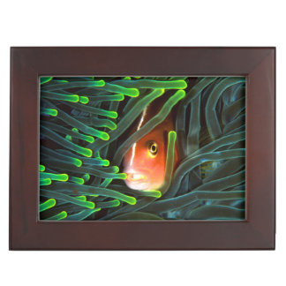 Anemone Fish Hiding In Anemone, Mozambique Memory Box