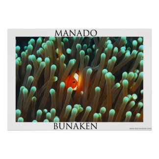 anemone fish in host anemone poster
