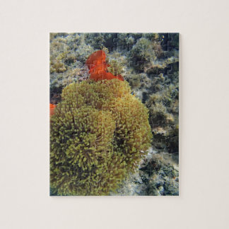 anemone fish puzzles