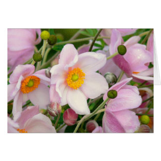 ANEMONE FLORAL/PALE PINK/NOTECARD/PHOTOG. CARD