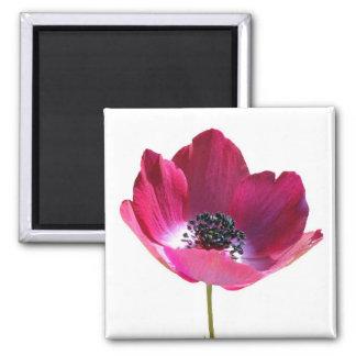 Anemone Flower Magnet