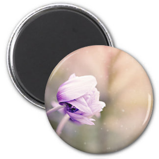 anemone magnet