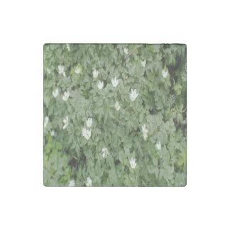Anemone nemorosa stone magnet