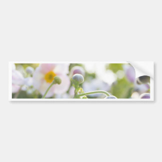Anemone - pink/white flowers in sunlight bumper sticker