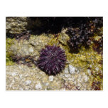 Anemone Post Cards