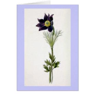 """Anemone Pulsatilla"" Vintage Illustration Greeting Card"