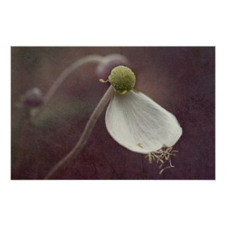 Anemone read leaf poster