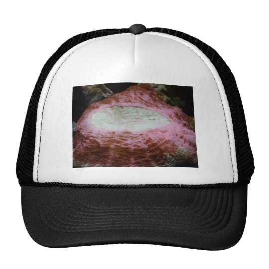 anemone,red trucker hat