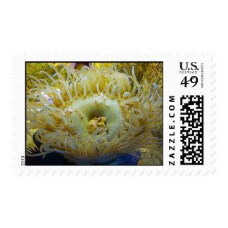 Anemone Sea Creature Stamps