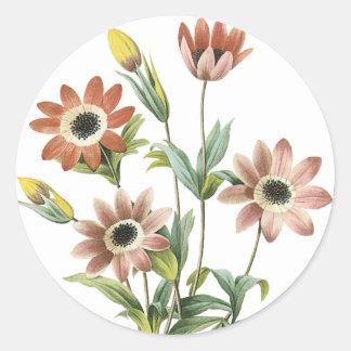 Anemone Stellata Classic Round Sticker