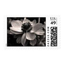 Anemone Sympathy Thank you memorial Stamp