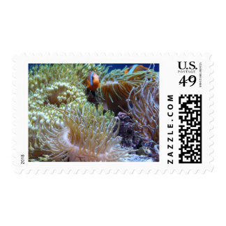 anemone, with peeking clown fish postage stamps