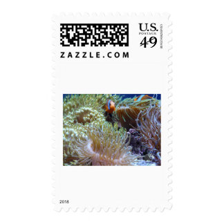 anemone, with peeking clown fish postage