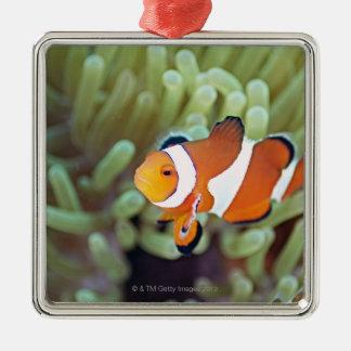Anemonefish 4 del payaso adornos