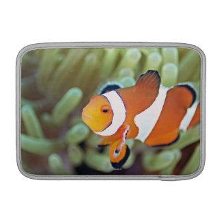 Anemonefish 4 del payaso funda macbook air