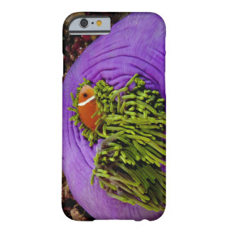 Anemonefish and large anemone barely there iPhone 6 case