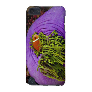 Anemonefish and large anemone iPod touch (5th generation) cases