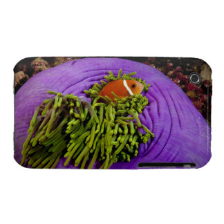 Anemonefish and large anemone iPhone 3 case