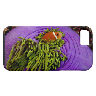 Anemonefish and large anemone iPhone SE/5/5s case