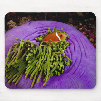 Anemonefish and large anemone mouse pad