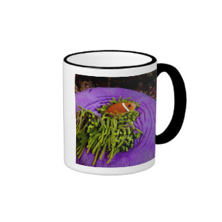 Anemonefish and large anemone ringer mug