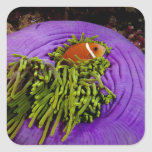 Anemonefish and large anemone stickers