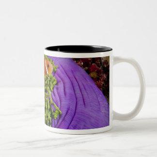 Anemonefish and large anemone Two-Tone coffee mug
