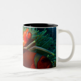 Anemonefish coffee mug