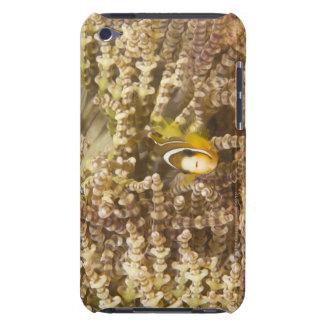 Anemonefish de Clark juvenil (Amphiprion) iPod Touch Case-Mate Cárcasa