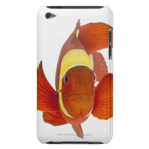 anemonefish de la Espina-mejilla (biaculeatus de P iPod Touch Carcasas