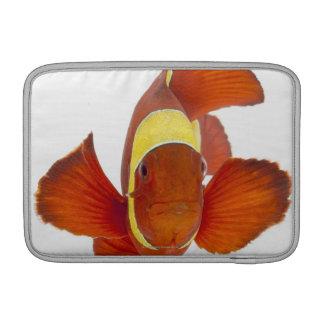 anemonefish de la Espina-mejilla (biaculeatus de P Funda Macbook Air